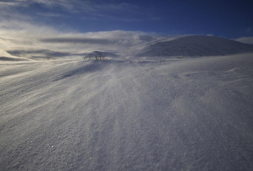 Wind is transporting snow Landscape, landskap,