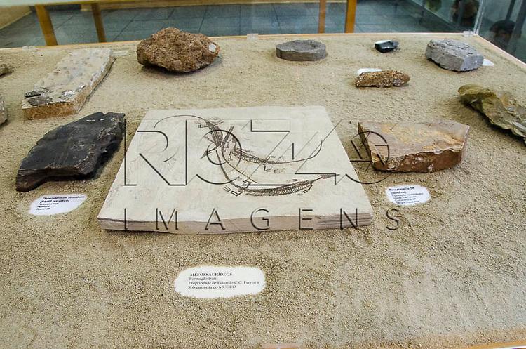 Fósseis de animais, no centro : Mesossaurídeos, Formação Irati. Sob custódia do MUGEO. Museu Geológico Valdemar Lefèvre, São Paulo - SP, 07/2014.