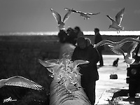 Gallipoli - Lungomare - L'uomo che cibava i gabbiani.