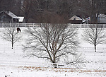 A horse forges on a freshly snow covered pasture, Saturday, December, 16, 2017, in on Ninth District Road in Somers. (Jim Michaud / Journal Inquirer)