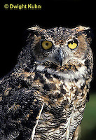 OW06-054z  Great horned owl - Bubo virginianus