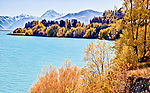 A patch work of autumn colours envelop the Pukaki lake side vegetation below Aoraki Mount Cook..This New Zealand Fine Art Landscape Print, available in four sizes on either archival Hahnemuhle Fine Art Pearl paper or canvas, is printed using Epson K3 Ultrachrome inks and comes with a lifetime guarantee against fading..All prints are signed and numbered on the lower margin and come with my 100% money back guarantee on the purchase price, should you not be  completely happy with the quality of the delivered print or canvas.