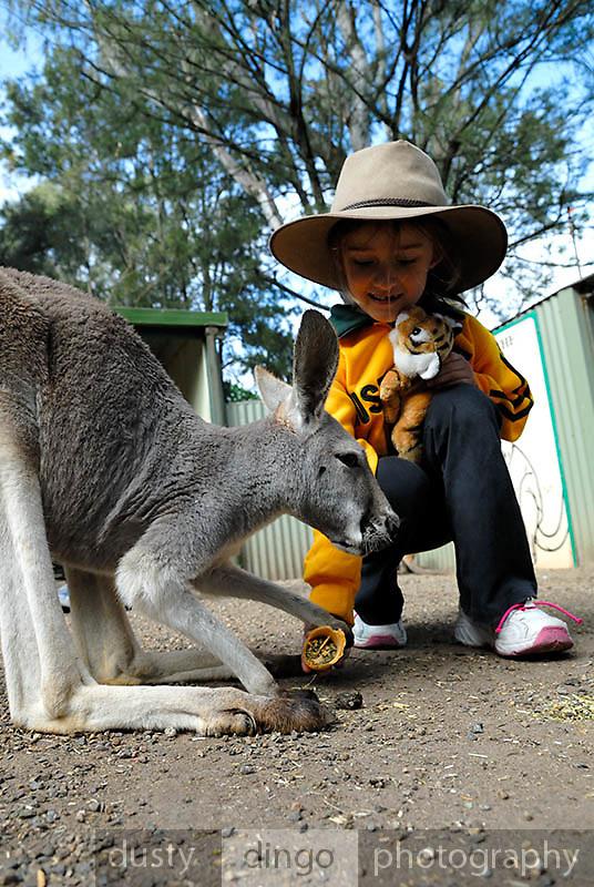 Child (6 years old) feeding Kangaroo. Sydney, Australia