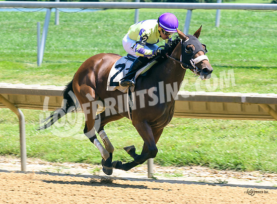 Beautiful Maiden winning at Delaware Park on 7/3/17