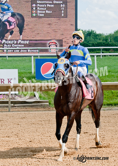 Picko's Pride winning The Hockessin Stakes at Delaware Park on 7/4/13