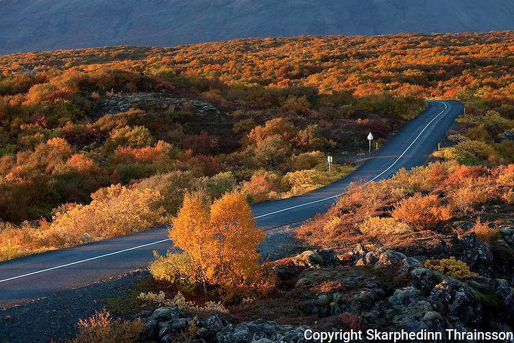 Autumn road to Þingvellir