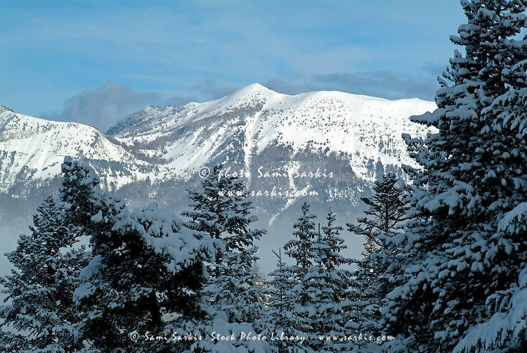 Snow-covered fir trees and a mountain valley near Chabanon, French Alps, France.