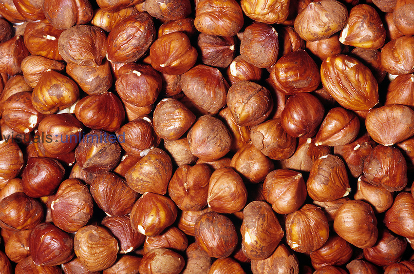 Shelled Hazelnuts or Filberts (Corylus avellana). Native to Southeastern Europe and Western Asia.