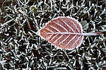 Winter with frosted leaf on frozen grass with ice crystals