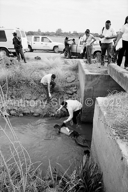 Culiacan, Mexico<br /> June 13, 2007<br /> <br /> A drug related execution, adding to the more then 300 this year in Cuilacan. Francisco de Jes&uacute;s Ibarra, 33 was found lying in a canal on the outskirts of San Pedro. He had been beaten and shot in the head. . .Family members break down and cry as his body is removed from the canal.