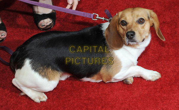 New York, NY- October 13: Andy The Dog attends the Summit Entertainment and Thunder Road Pictures New York screening of John Wick at the Regal Union Square on October 13, 2014 in New York City.  <br /> CAP/RTNSTV<br /> &copy;RTNSTV/MPI/Capital Pictures