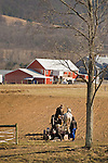 Jacob Stotzfus farm, Nippenose Valley, Lycoming County. Amish family applying black plastic with two team horse..