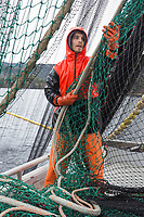 Fishermen guides the lead line of the seine net during the Sitka sac roe herring fishery in Southeast, Alaska.