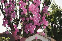 Giro d'Italia stage 13.Savano-Cervere: 121km..pink grapes