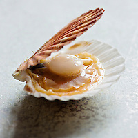Europe/France/Normandie/Basse-Normandie/14/Calvados: Coquilles Saint-Jacques de Normandie - Stylisme : Valérie LHOMME  //  France, Calvados, Calvados, Normandy scallops, Styling Valerie Lhomme
