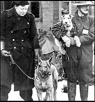 BNPS.co.uk (01202 558833)<br /> Pic:   ImperialWarMuseum/BNPS<br /> <br /> Two Dickin Medal winners; Mr Bill Barnett holds Beauty aloft (right) and Irma stands with her handler, Mrs Margaret Griffin who was later awarded the British Empire Medal for her work training rescue dogs.<br /> <br /> The remarkable stories of the 71 heroic animals who have received the pet equivalent of the Victoria Cross are told in a new book.<br /> <br /> They include a dog who dragged his drowning handler to safety in a torrent of shells and machine gun fire and a carrier pigeon which flew 120 miles to raise the alarm for a bomber crew who had crashed into the sea.<br /> <br /> Their courageous acts, and others involving dogs, cats, pigeons and horses, feature in history teacher Philip Hawthorne's book, The Animal Victoria Cross: The Dickin Medal.