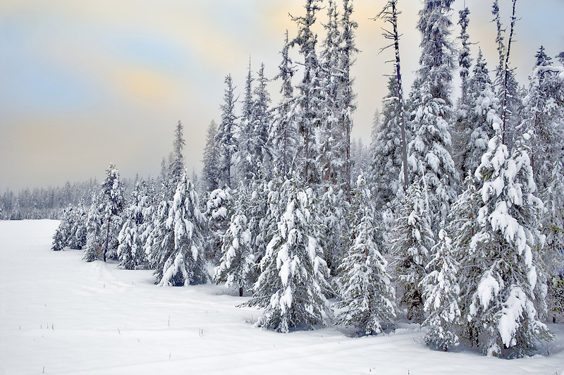 Snow covered forest on the Elkhorn Drive National Scenic Byway with sunrise. Oregon