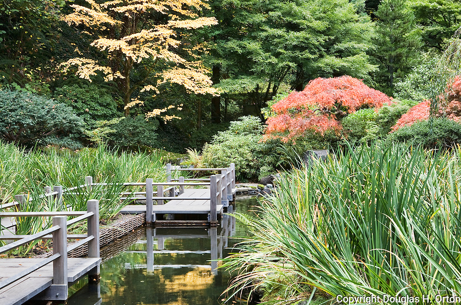 bridge on koi pond and iris garden the japanese garden in portland is a 55