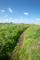 Farm drain - Lincolnshire, May; landscape