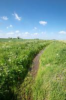 Farm drain - Lincolnshire, May; landscape