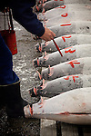 Tokyo, 1st of March 2010 - Tuna at Tsukiji wholesale fish market, biggest fish market in the world. 5 a.m, frozen tunas are numbered whith red painting before the auctions.