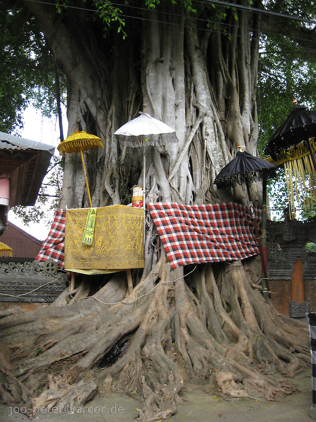 Holy Tree in temple of viilage Bangli, central Bali, archipelago Indonesia. All the colors have a meaning: white is Shiva,  black is Vishnu, red is Brahma and yellow is the  holy color in general (see also Kuningan, the holy days named after the color yellow, Kuning).