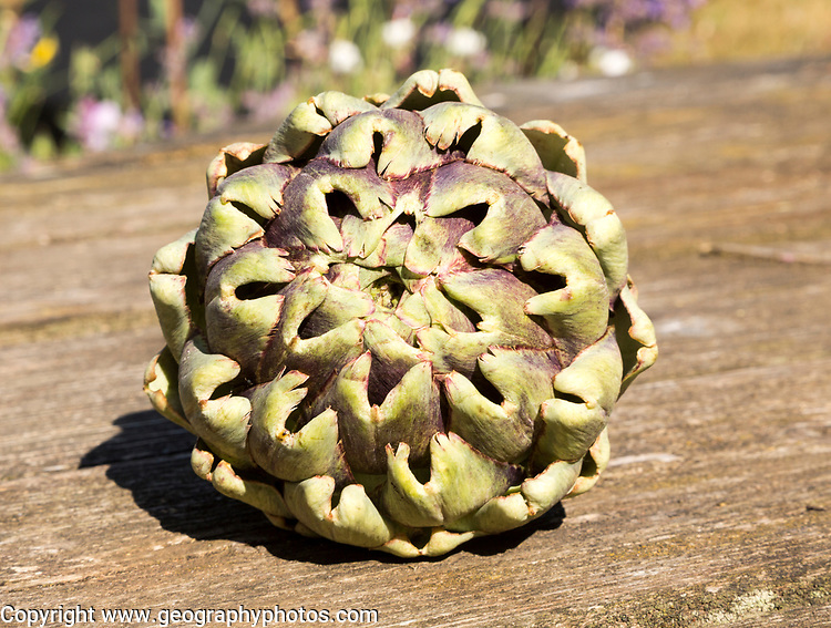 Close up of leaves at top of globe artichoke fruit on wooden table surface