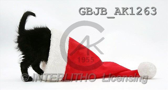 Kim, CHRISTMAS ANIMALS, photos(GBJBAK1263,#XA#) stickers