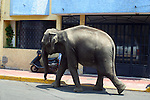 The CIRCUS COMES to TOWN. MAN LEADS CIRCUS ELEPHANT ALONG ON MEXICAN STREET