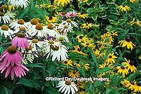 "63821-09206 White Swan & Purple Coneflowers (Echinacea purpurea), Indian Summer Black-eyed Susans (Rudbeckia hirta ""Indian Summer) IL"