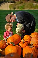 A 2-year-old and her father search for the best pumpkins among the hundreds displayed for sale in the front yard of the Masonic Temple in Westerville, OH. The pumpkins are a fund raiser for Boy Scout Troop 560.