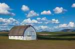 The Palouse, Whitman County, WA: White barn set in the rolling wheat fields