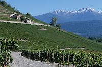 Europe/France/Rhone-Alpes/73/Savoie/Env de Chignin : Vignoble AOC Vins de Savoie