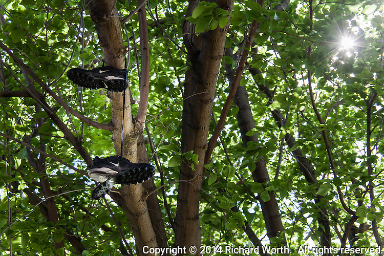 A well-worn pair of shoes dangles from the branches of tree adjacent to the soccer fields at an urban park.