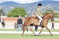 Graduate Hunter Large Pony
