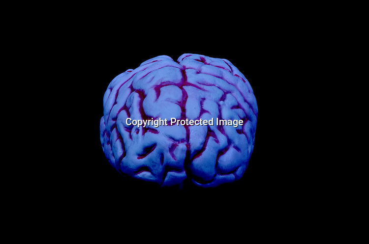 Stock photo of human brain
