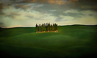 A famous Cypress Grove in the middle of rolling green fields in Val d'Orcia Tuscany Italy.