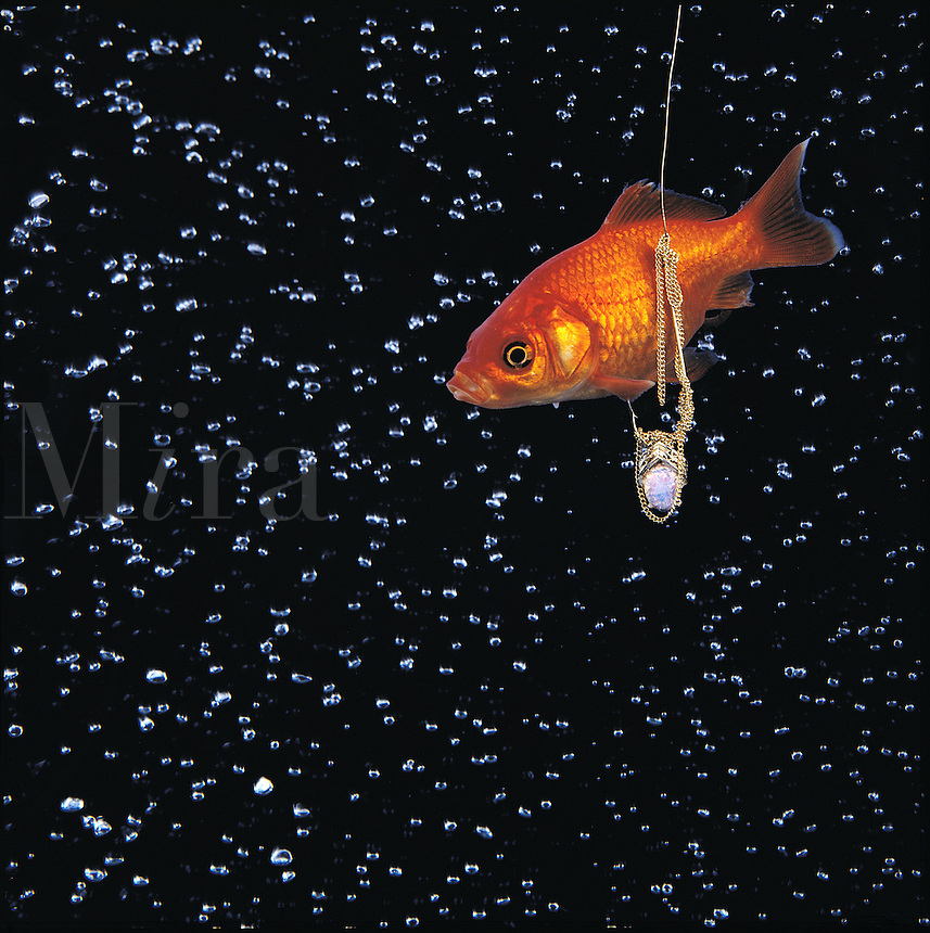 A goldfish is attracted to a fishook baited with a gold and opal necklace.