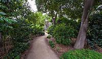 Path under oak trees and camellias in woodland area of Gamble Garden, Palo Alto, California