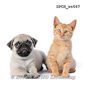 Xavier, ANIMALS, REALISTISCHE TIERE, ANIMALES REALISTICOS, FONDLESS, photos+++++,SPCHWS647,#A#