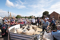 Breeding sheep going through the sale ring  in Thrapston market<br /> &copy;Tim Scrivener Photographer 07850 303986<br />      ....Covering Agriculture In The UK....