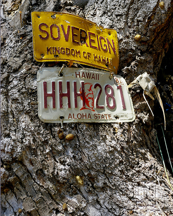 Old license plates nailed to tree speak of Hawaiian pride.