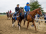 ELMONT, NY - JUNE 07: Tenfold completes preparations for the 150th Belmont Stakes at Belmont Park on June 07, 2018 in Elmont, New York. (Photo by Alex Evers/Eclipse Sportswire/Getty Images)