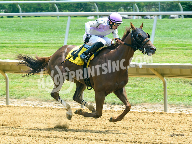 Notorious Cowboy winning at Delaware Park on 7/22/17