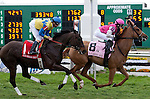 Feb 2011:  Working For Hops and Anna Napravnik (8) lead into the first turn of the Fair Grounds Handicap at the Fairgrounds in New Orleans, Louisiana.