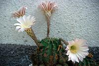 Fiori. Flowers. Cactus....