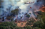 August 17, 1992 Angels Camp, California -- Old Gulch Fire— With helicopter support, firefighters work near Old Gulch Road.  The Old Gulch Fire raged over some 18,000 acres, destroying 42 homes while threatening the Mother Lode communities of Murphys, Sheep Ranch, Avery and Forest Meadows.