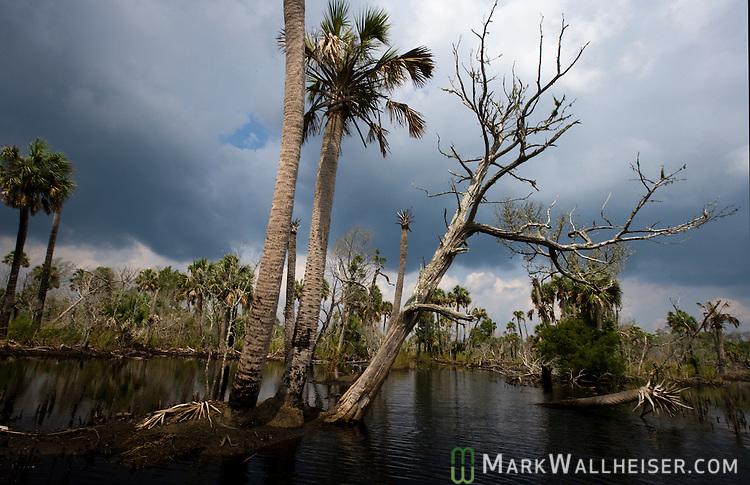 Spring Creek in Wakulla County, Florida south of Tallahassee August 30, 2009.  (Mark Wallheiser/TallahasseeStock.com)