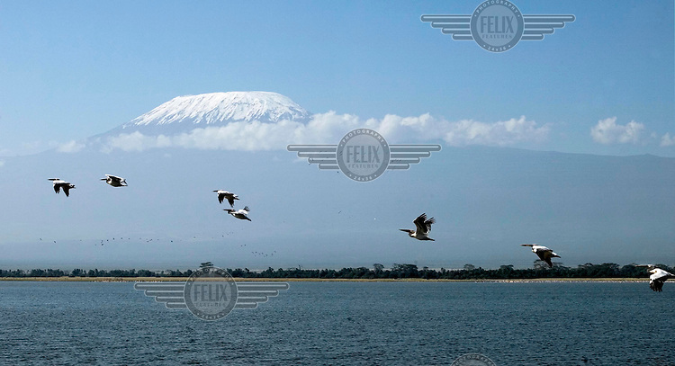 Birds flying over a lake near Mount Kilimanjaro.