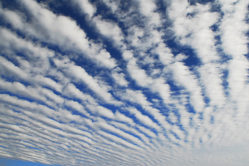 "Altocumulus Undulatus ""billows"" clouds produce what is known as a ""mackerel sky"" in late fall over Norman Oklahoma."